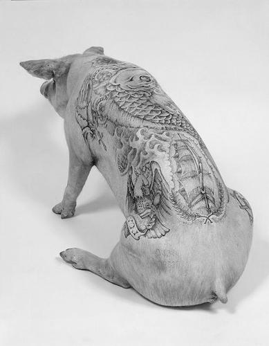 Wim+delvoye+tattooed+pigs